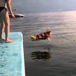 臆病な犬が勇気を出して海にダイブ♪