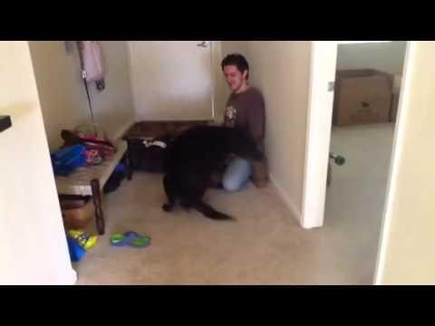 一年ぶりに大好きな飼い主と再会した犬の動画♪