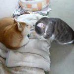 犬と猫のじゃれ合い動画です♪