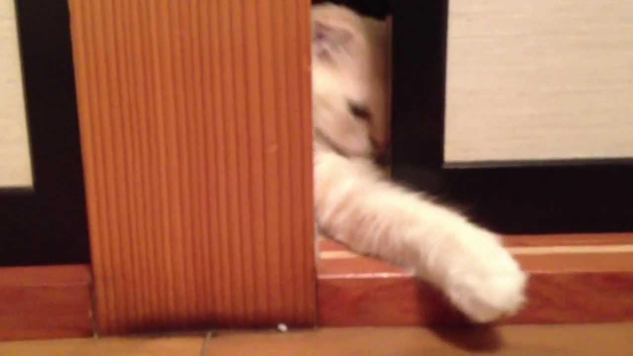 襖のスキマから手を出しじゃれる猫♪