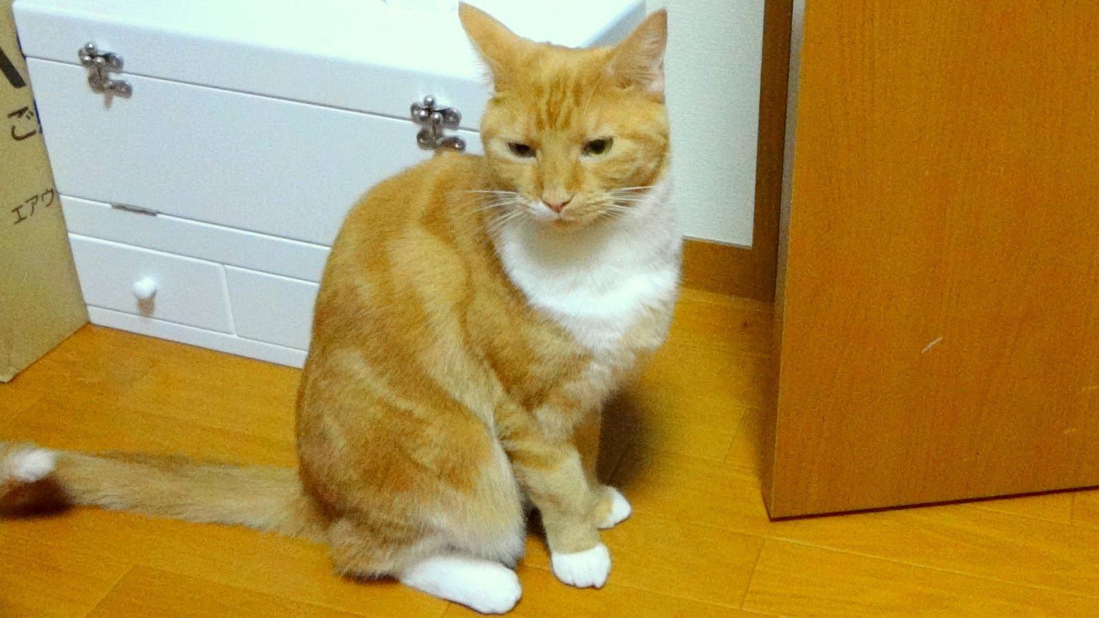 ご飯と言う言葉を理解している猫