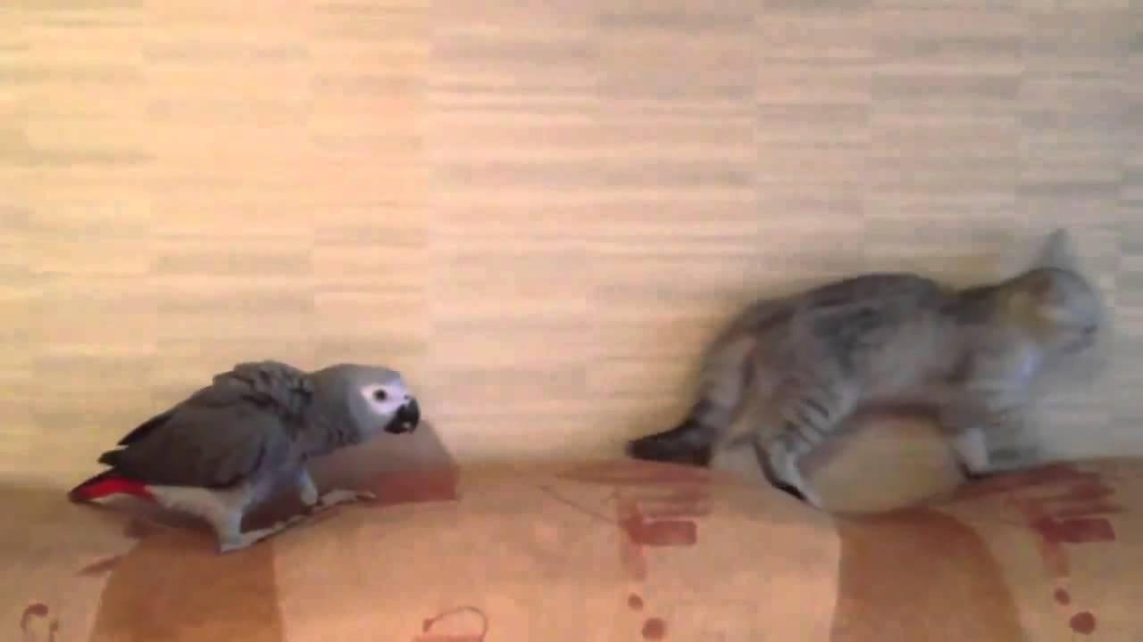 猫と鳥の奇跡のコラボ♪