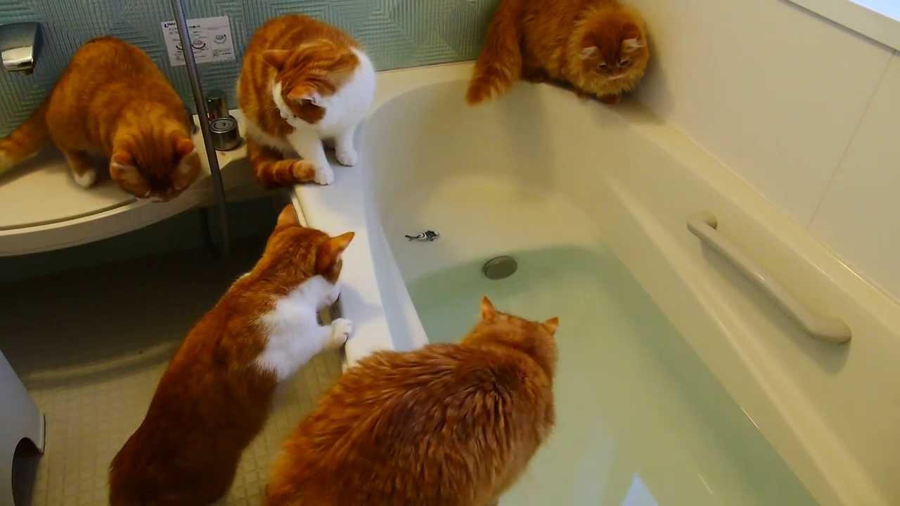 猫が魚を追ってお風呂にドボン!ちょ、助けてくれってw