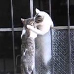 壁を越えようとする子猫を手助けする母猫の感動動画