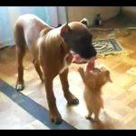 犬から食べ物を取ろうとする子猫のかわいさに悶絶♪
