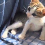すやすやと眠る子猫ちゃんの動画集♪