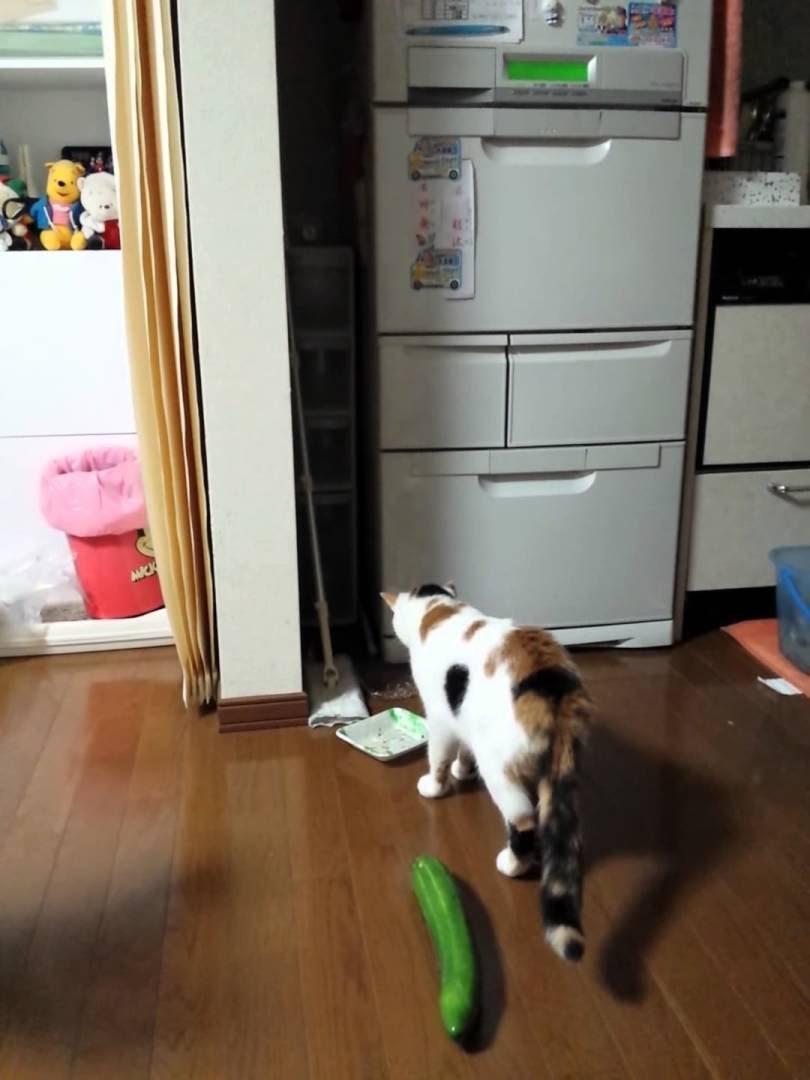 さっきまでなかったモノに驚く猫の反応がスゴイ!