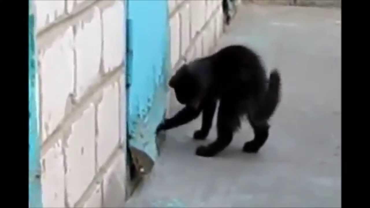猫が犬を救出する感動の動画♪