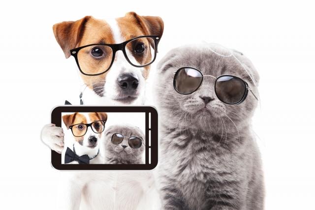 【お知らせ】犬猫好き専用のMastodon(マストドン)が出来ました♪