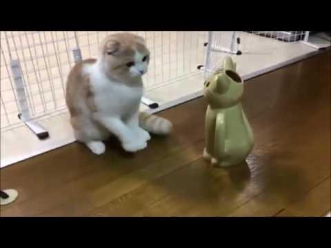 猫の置物と対決する最弱のネコパンチww