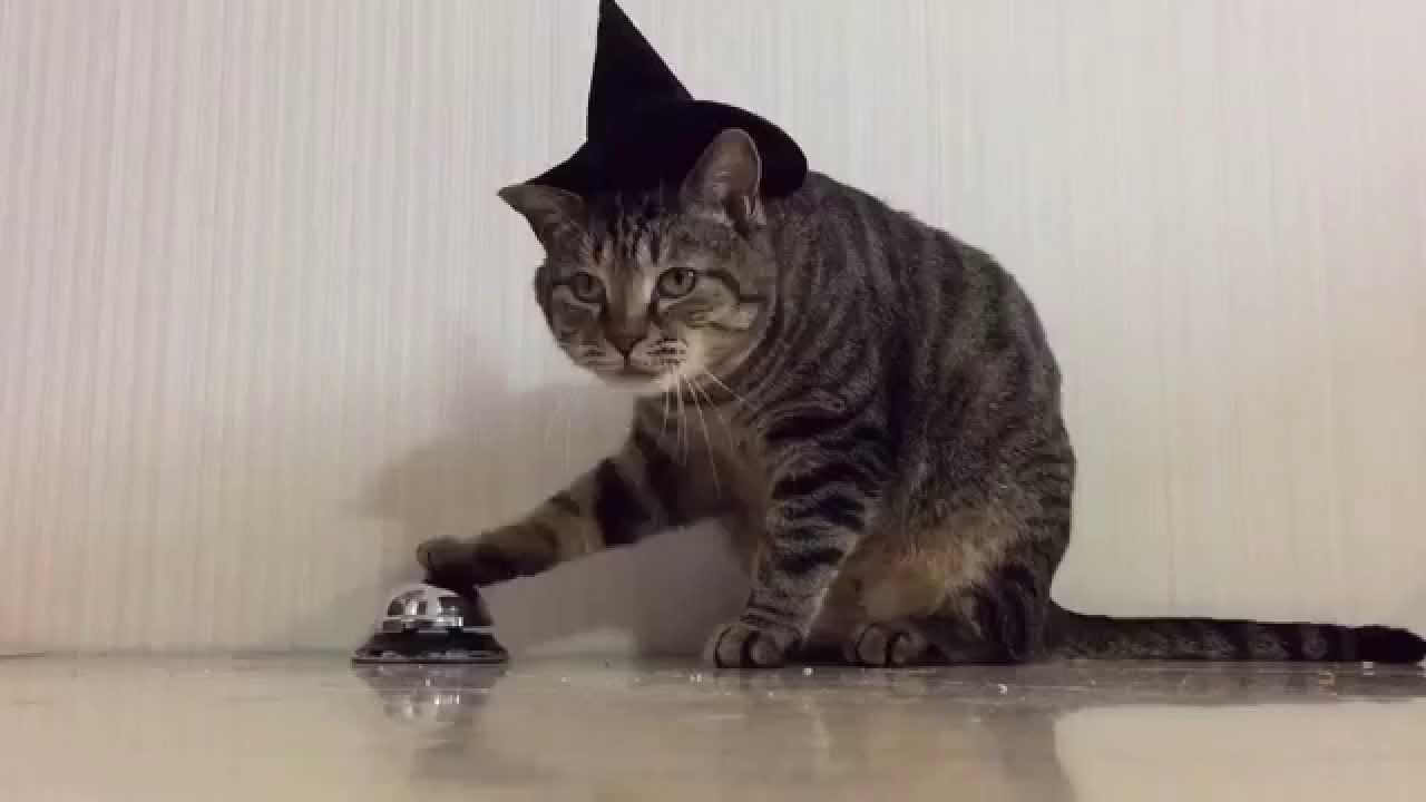 ベルを鳴らしておねだりする賢い猫ちゃん♪
