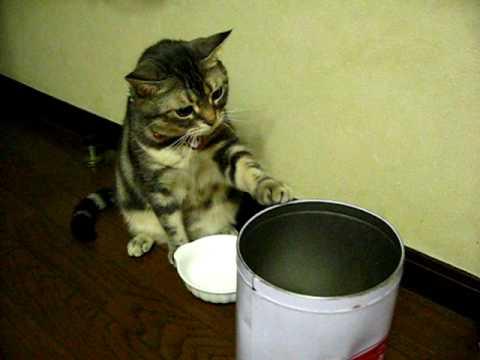 ご飯をくださいー!誰かーご飯をー!と訴える猫♪