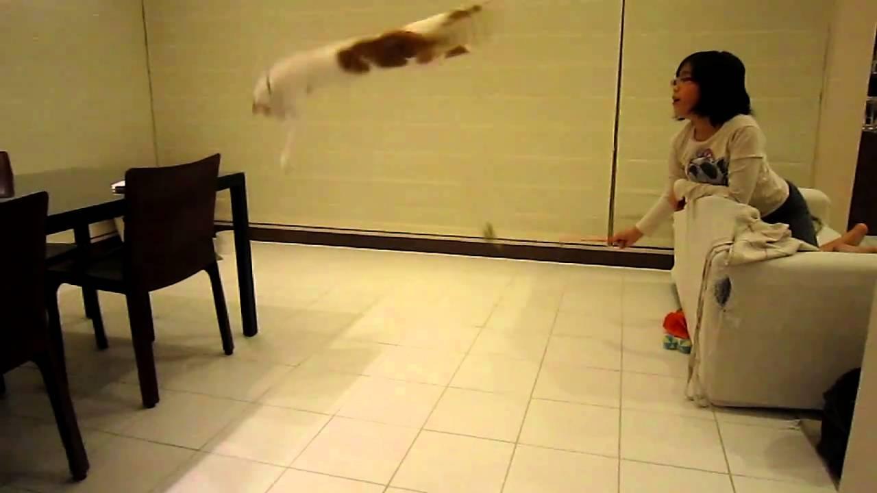 動画終盤の華麗なる猫ジャンプに注目!