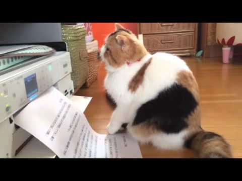 プリンターとじゃれる猫♪困った顔でなんだこれ?