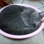 洗面器がちょうどいい寝床の猫♪