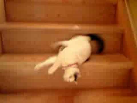 クネクネと滑るように階段を下りてくる猫♪