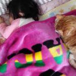 添い寝して人間の赤ちゃんを守る猫ちゃん♪