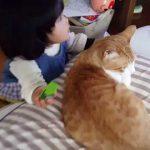 仲良しの赤ちゃんと猫ちゃん♪