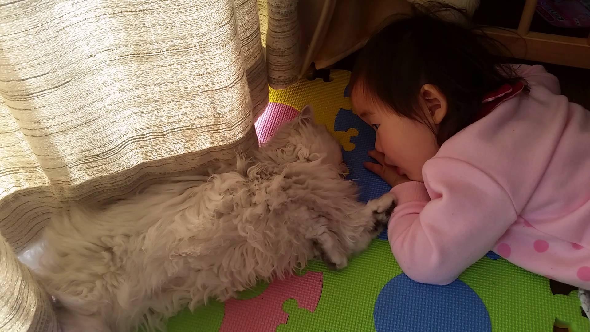 赤ちゃんとチンチラ猫の仲睦まじい姿♪