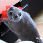 イタズラが見つかってしまい、僕はやってないと目で訴える猫の動画w
