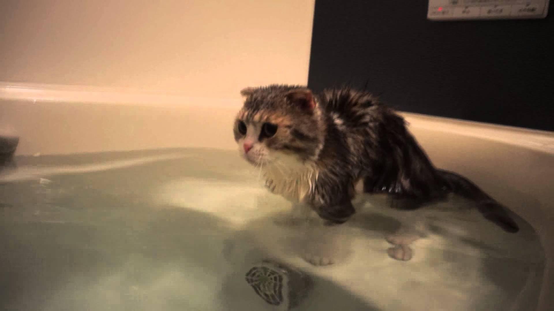 お風呂大好き猫♪気持ちよさそーに入浴中
