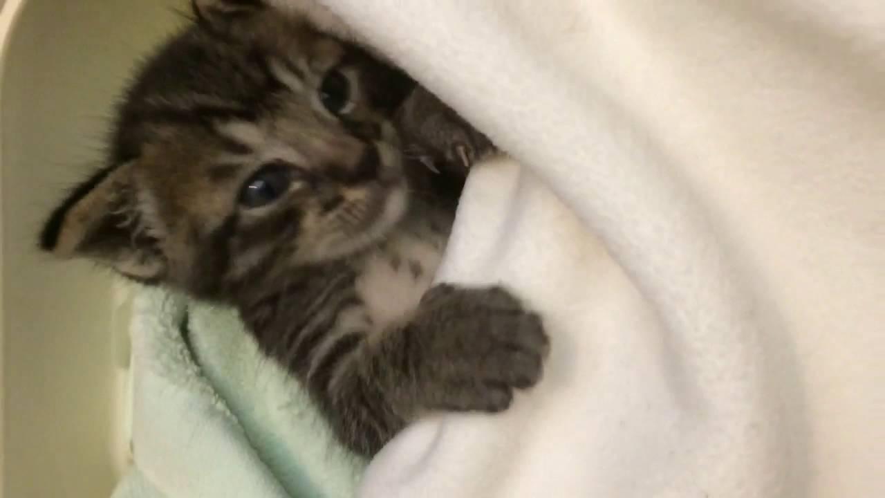 まるで人間の赤ちゃんみたいに眠る子猫の動画♪