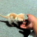 拾われた子猫がカワユス♪幸せになるんだよー