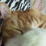 顔を手で隠す仕草が可愛い猫♪