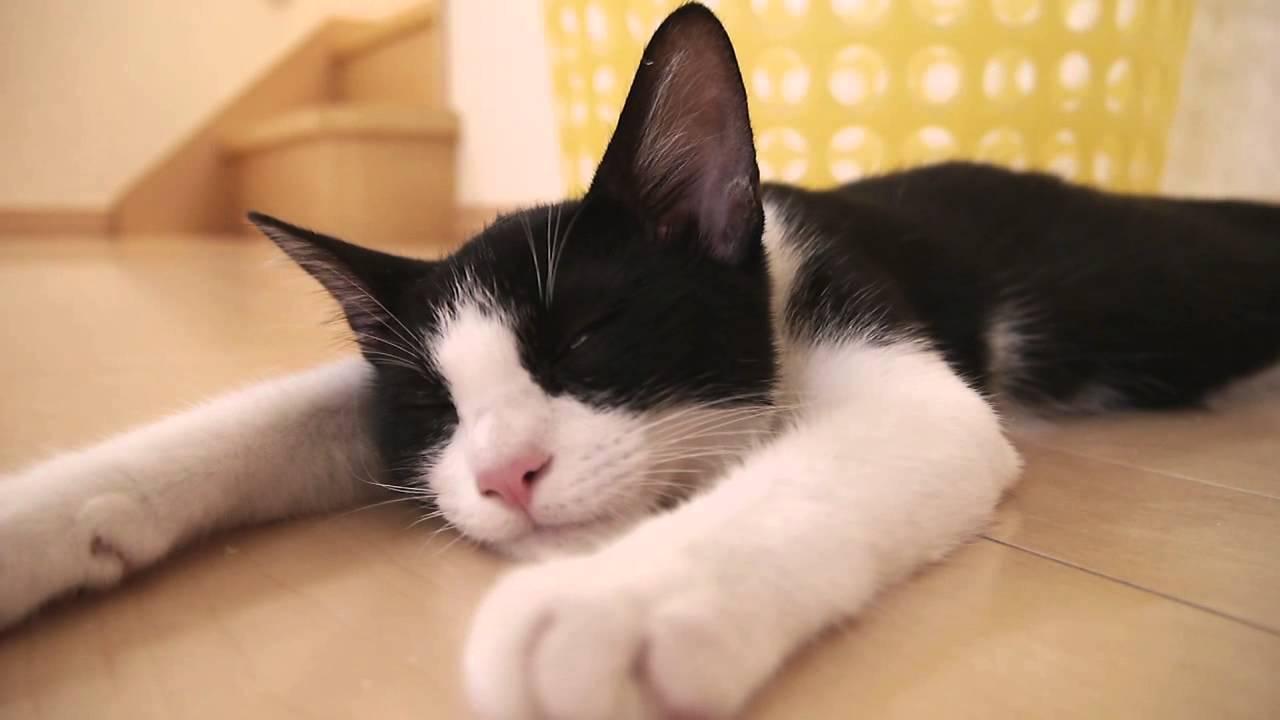 【発見】可愛すぎるバテ猫♪
