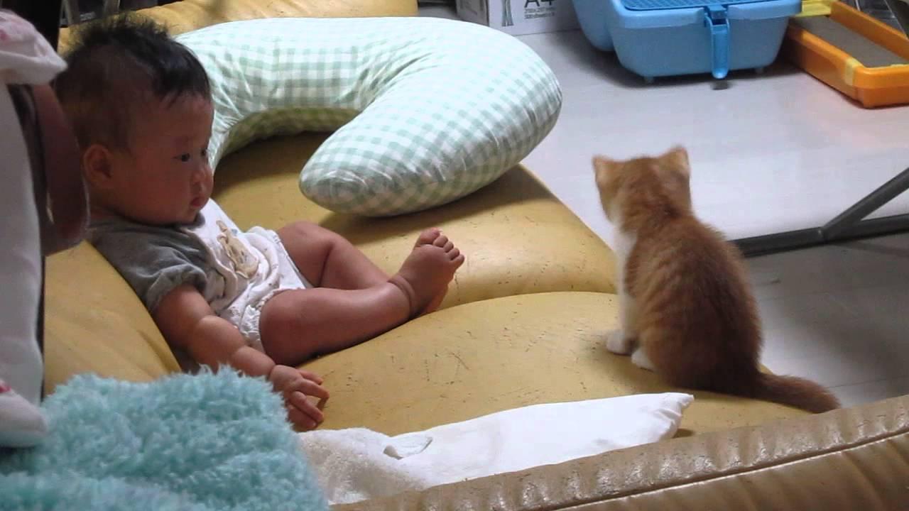 子猫と赤ちゃんの緊張の初対面♪両者なかなか距離が距離が縮まりません。。