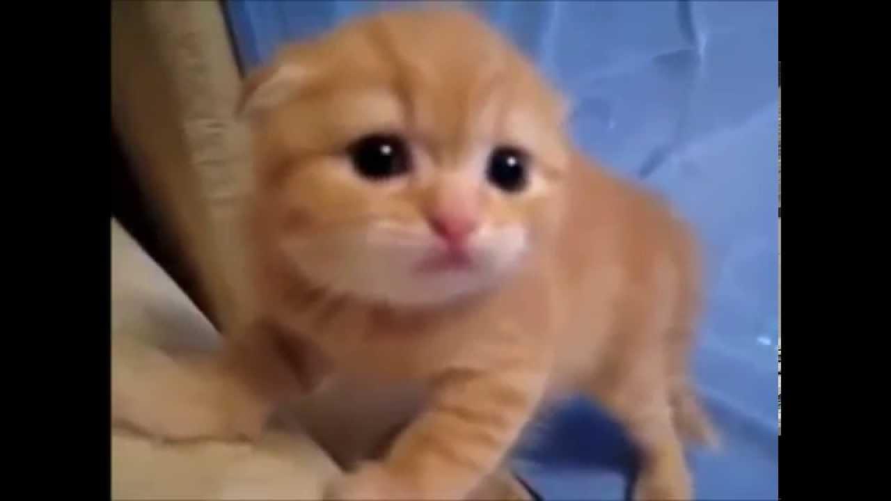 【キュン死確定】お母さんが居なくなって威嚇する子猫♪