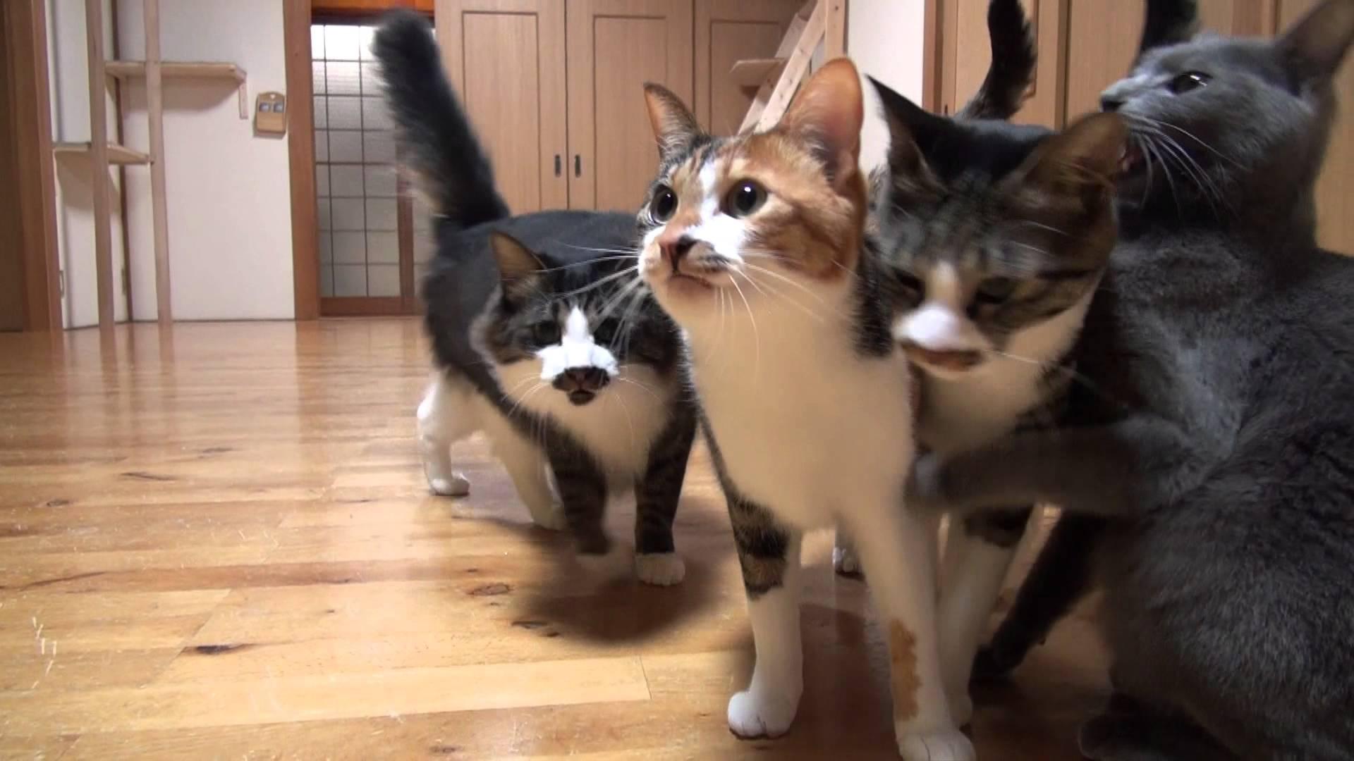 沢山の猫に囲まれて過ごすとこんな毎日なのか!