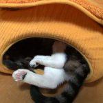 ぎゅうぎゅうのキャットハウスに集う猫たち♪