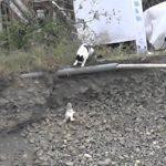 【母は強し】なかなか登れない子猫ちゃんを母猫が救助