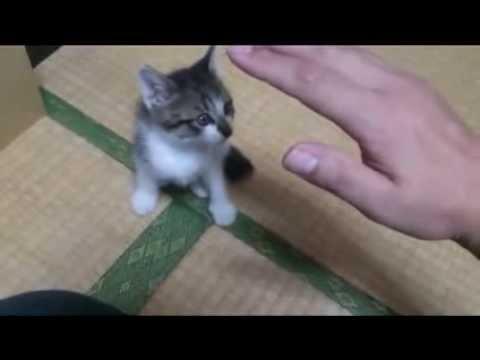 一生懸命に遊ぶ子猫の動画♪