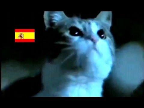 スペインの交通安全CM。主演:犬と猫♪