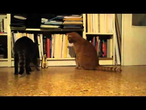 猫vsメトロノーム!カチカチに合わせてビクッとする可愛い猫♪
