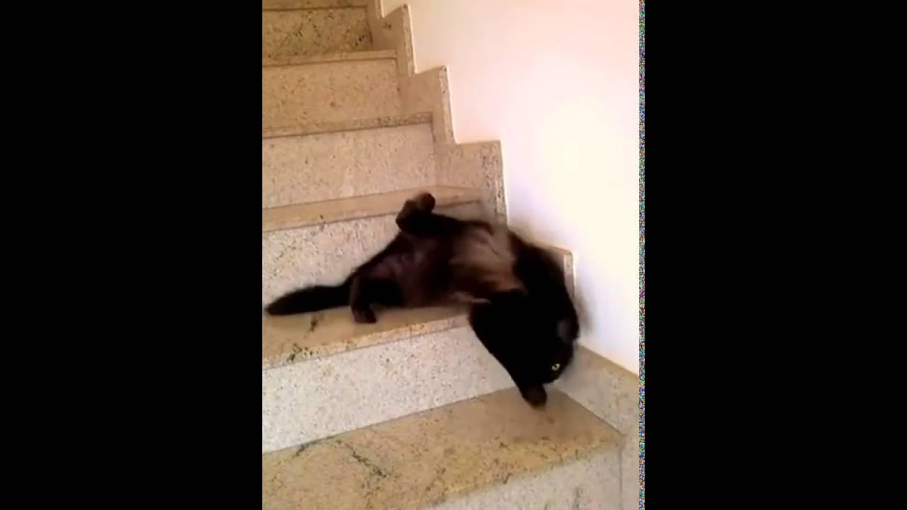 驚愕の猫の階段下り?!まさかのウナギ下りww