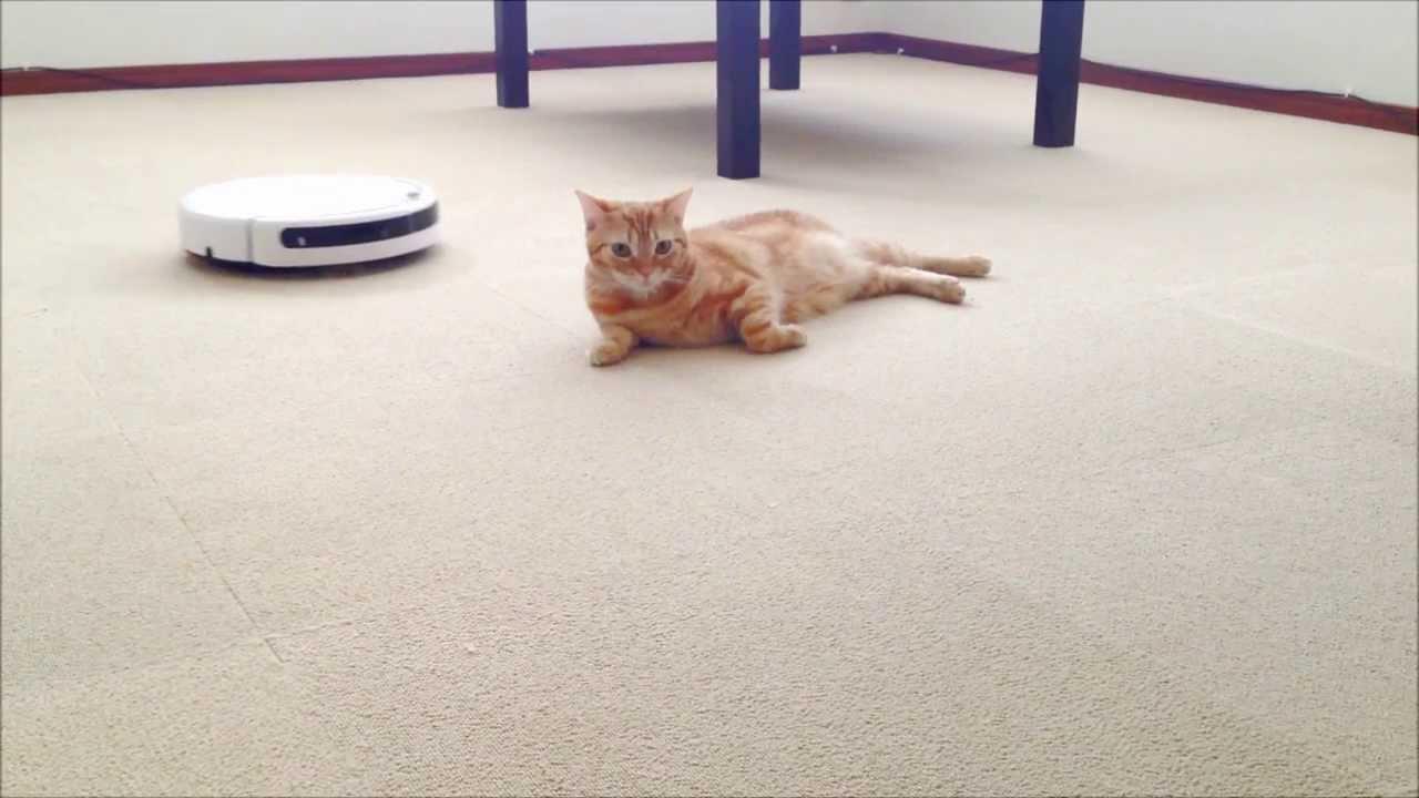 ルンバに全く動じず一歩も動かない猫の動画ww