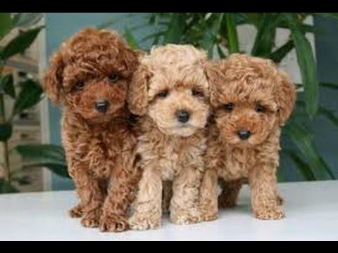 この犬知ってる?人気の可愛い犬種10選