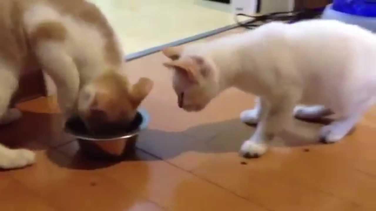 猫がエサを譲り合ったら世界が平和になった、、、かもしれない動画ww