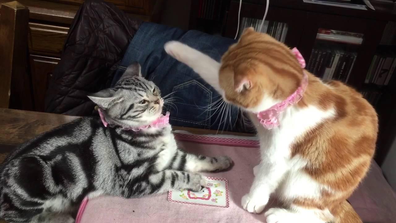 人気のyoutube猫動画まとめ