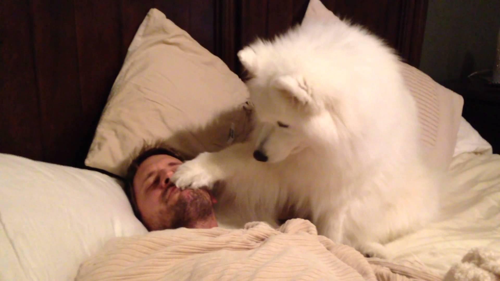イケメンパパの寝込みを襲う巨大モフモフ犬!