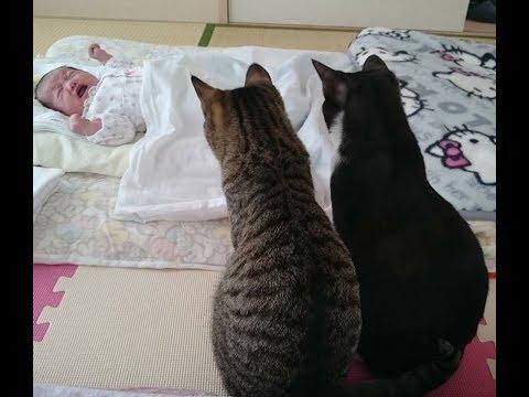 初めて人間の赤ちゃんを見た猫の反応!最強に可愛い組み合わせです。