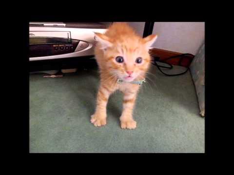 「猫」を初めてみる子猫の動画
