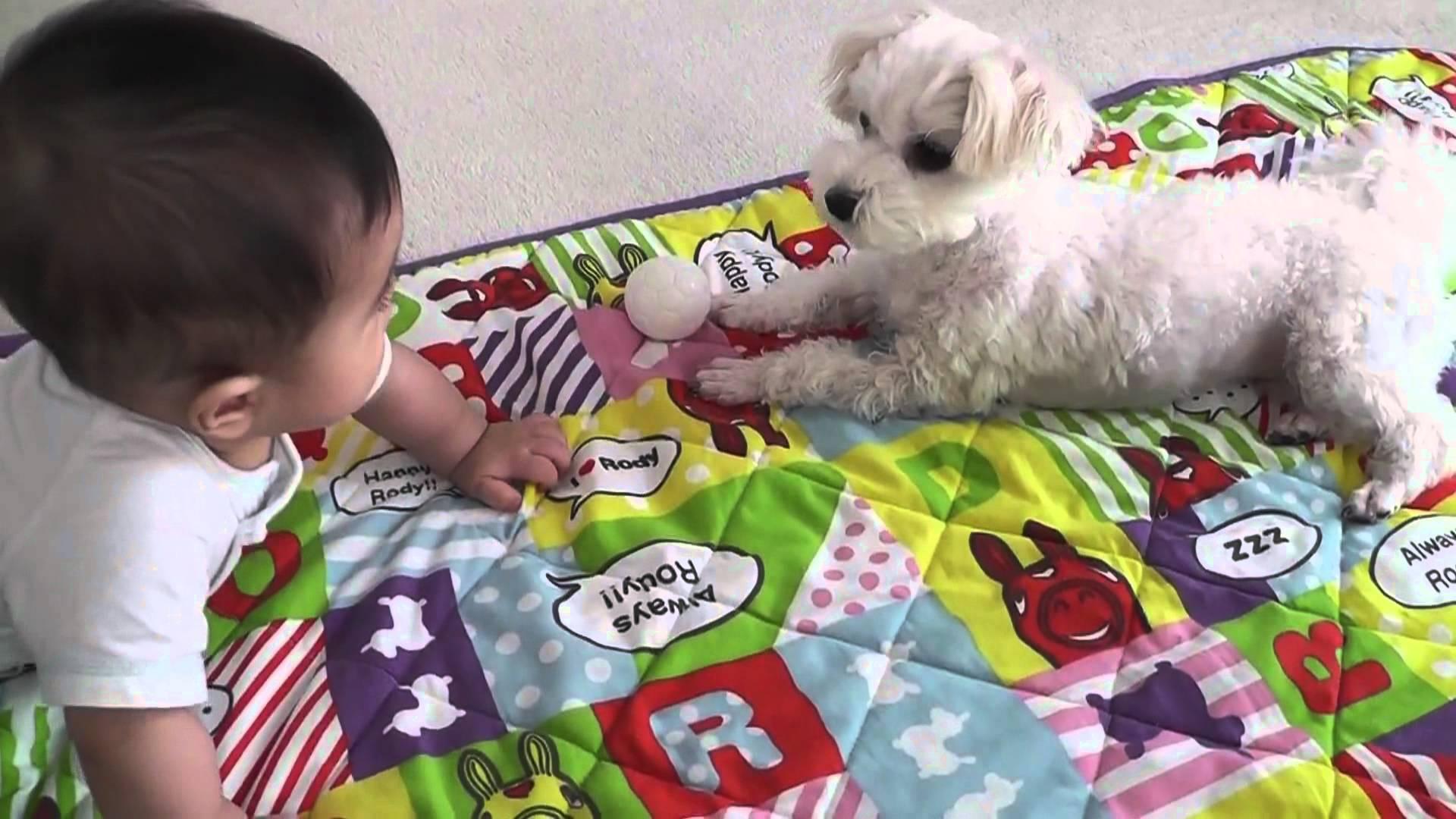 赤ちゃんにお気に入りのボールを貸してあげるワンコ