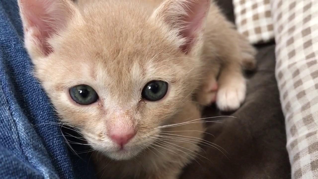 寝起きで甘えてくる赤ちゃん猫がキュートな動画♪