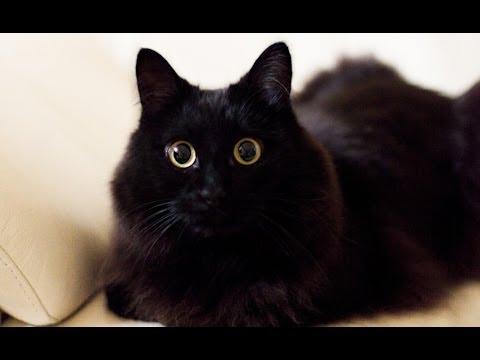 「おかえり!」としゃべる猫?!しおちゃんの動画