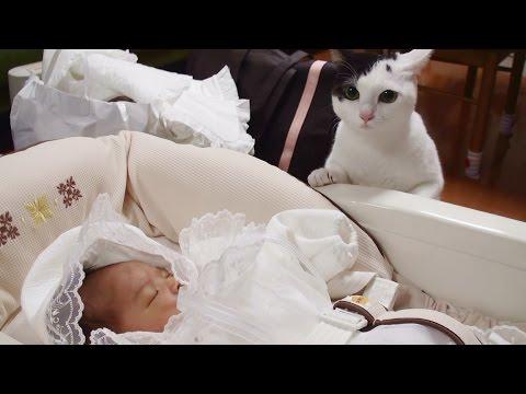 赤ちゃんに初対面の猫が可愛すぎる件!