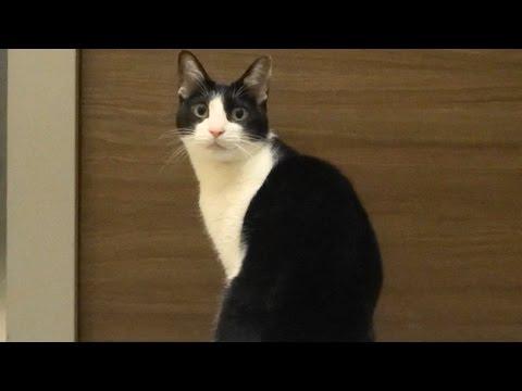 飼い主さんが出掛けてしまって寂しい猫